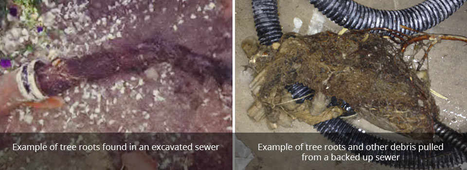 Example of tree roots found in an excavated sewer | Example of tree roots and other debris pulledfrom a backed up sewer